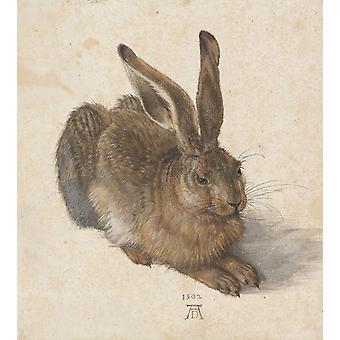 Una liebre joven, Albrecht Durer, 50x45cm