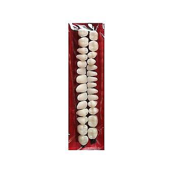 Pro Material Dental Dientes Plásticos Modelo de Enseñanza