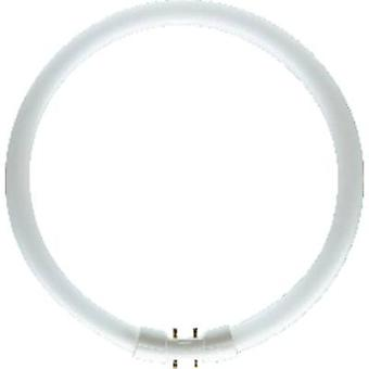 Fluorescent tube 2GX13 40 W Warm white 830 Ring shape (Ø x L) 16 mm x 305 mm EEC: A+ (A++ - E) 1 pc(s)
