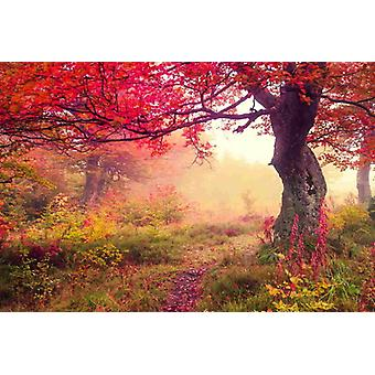 Wallpaper Autumn Tree