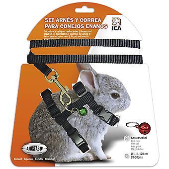 ICA sele dverg kanin (liten pets, fører & seletøy)