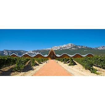 Bodegas Ysios winery building and vineyard La Rioja Spain Poster Print