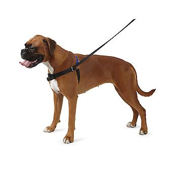 Ancol Pet Products Pure Dog Listeners Harness And Lead Set With DVD