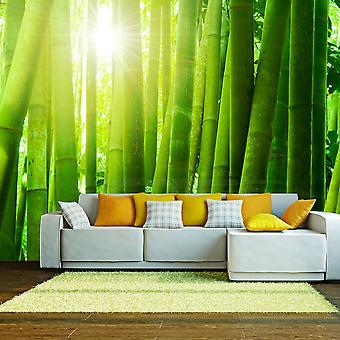 Fotomurale - Sole e bambù