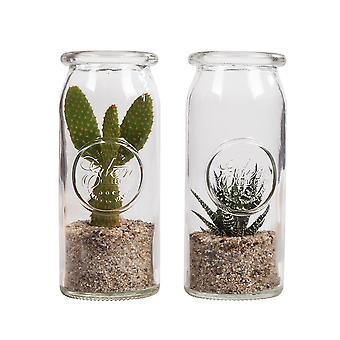 Planta interior de Botanicly - Pera espinhosa - Altura: 30 cm - Opuntia