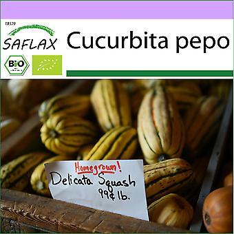 Saflax - 6 zaden - Biologisch - Squash - Delicata - BIO - Courge - Delicata - BIO - Zucca - Delicata - Ecológico - Calabaza - Delicata - BIO - Kürbis - Delicata
