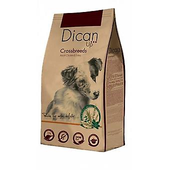 Dican Up Cross Breeds for Dogs  (Honden , Voeding , Droogvoer)