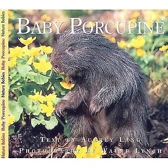 Baby Porcupine (Nature Babies)