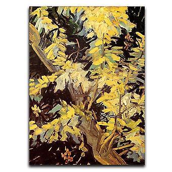 Kukkivat akaasiahaarat kangas