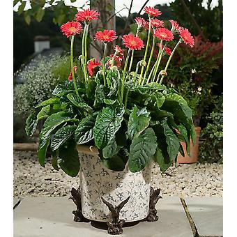 Potty Feet American Bald Eagle Plant Pot Feet - Set of 3