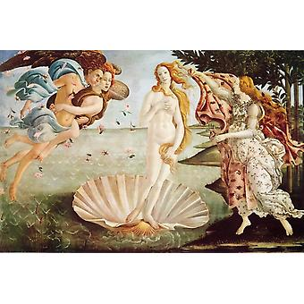 Botticelli Venus Birth Of Venus Poster Poster Print