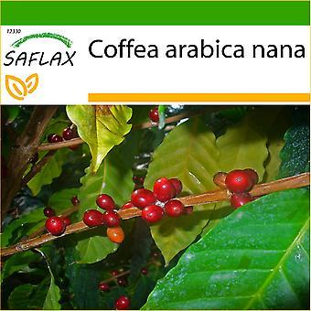 Saflax - 8 Samen - mit Boden - Zwerg-Kaffee - Caféier d'Arabie - Pianta di Caffè - Planta del Café - Zwergkaffee-Strauch