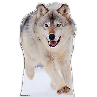 Wolf - Lifesize karton gestanst / Standee
