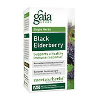 غايا الأعشاب الأسود Elderberry، 60 قبعات
