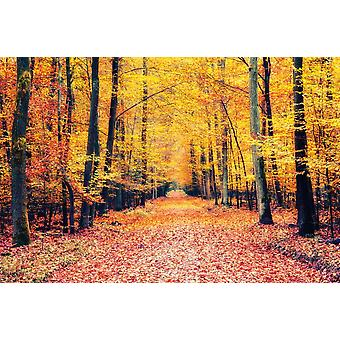 Wallpaper Mural Pathway In The Autumn Forest (400x260 cm)