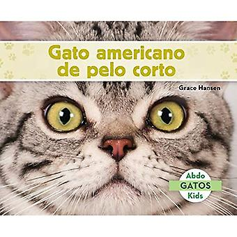 Gato Americano de Pelo Corto (American Shorthair Cats) (Spanish Version) (Gatos (Cats Set 2))