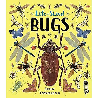 Life-Sized Bugs (Life-Sized)