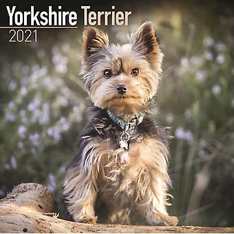 Yorkshire Terrier 2021 Wall Calendar by Created by Avonside Publishing Ltd