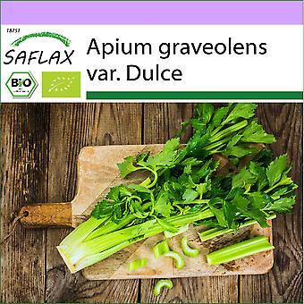Saflax - 500 sementes - Orgânico - Pascal celery - Alto Utah - BIO - Céleri en filiais - Alto Utah - BIO - Sedano - Alto Utah - Ecológico - Apio - Alto Utah - BIO - Stangensellerie - Alto Utah