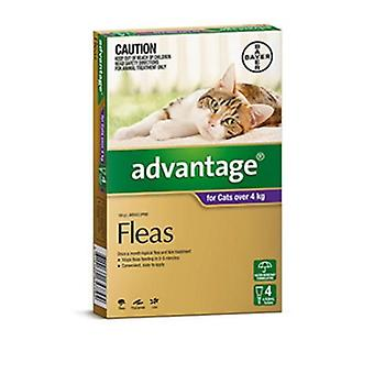Advantage Purple 4 Pack Large Cat 4-8kg