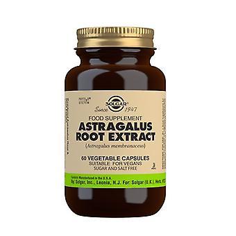 Solgar Astragalus rot extrakt (SFP) Vegicaps 60 (4106)
