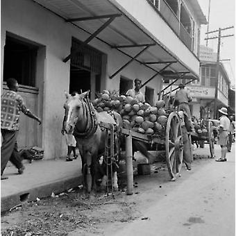 טרינידד וטובגו אגוזי קוקוס על עגלות סוסים הדפסה פוסטר