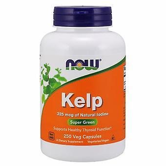 Now Foods Kelp 325 mcg, 250 Caps