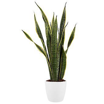 Zimmerpflanze – Bogenhanf in weißem Übertopf als Set – Höhe: 80 cm