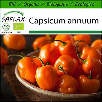 Saflax - 20 seeds - With soil - Organic - Hot Chili Pepper – Habanero Orange - BIO - Piment - Habanero orange - BIO - Peperoncino - Habanero Orang - Ecológico - Chile - Orégano Habanero - Chili - Habanero Orange