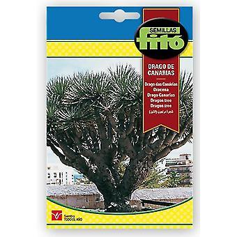 Semillas Fitó Canary island drago (Garden , Gardening , Seeds)
