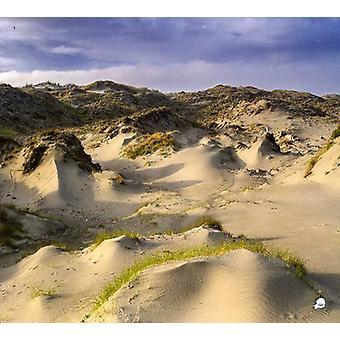 White Manna - Dune Worship [CD] USA import