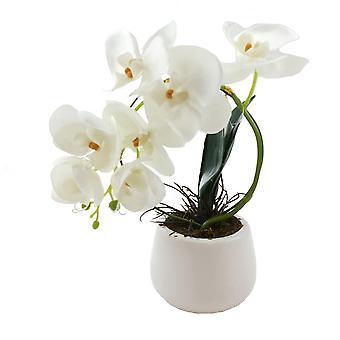 Orkidé Båge i kruka 26 cm