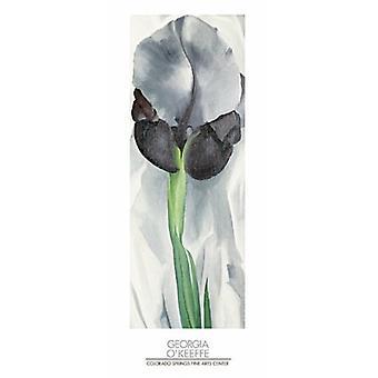 ジョージア州 OKeeffe (16 × 38) アイリス ポスター印刷