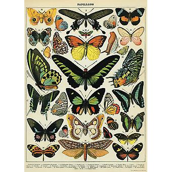 Cavallini Luxury Butterflies Wrapping Paper / Poster