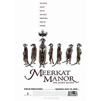 Plakat filmowy Meerkat Manor (TV) (11 x 17)