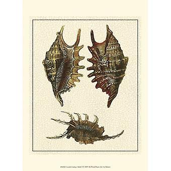 Spraket antikke skjell V Poster trykk av Denis Diderot (10 x 13)