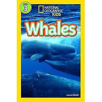 Balene (Level3) (National Geographic Kids lettori (livello 3))