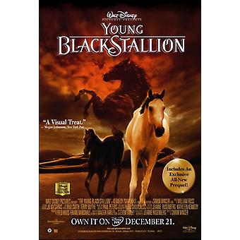 Young Black Stallion Movie Poster (27 x 40)