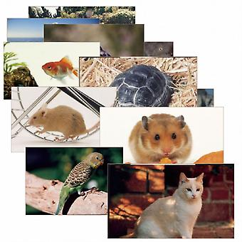 Pets Poster Set, Set Of 14