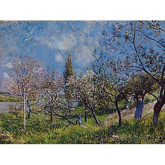 Frutteto in Sping-By, Alfred Sisley, 54x72cm