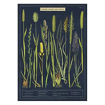 Cavallini British Grass and Sedges Wrapping Paper Poster