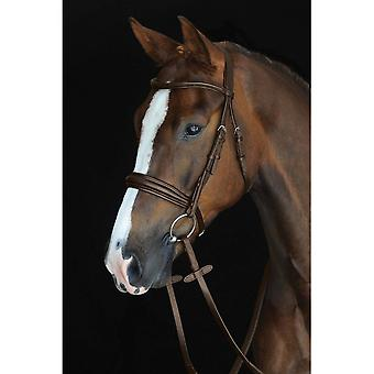 Collegiate Mono Crown Padded Raised Cavesson Bridle - Brown