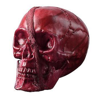 Yescom Halloween Skeleton Head Human Skull Plastic Prop Haunted House Party Ornament Horror Decoration