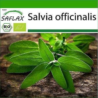 Saflax - 60 Samen - Mit Erde - Bio - Salbei - BIO - Sauge - BIO - Salvia - Ecol'gico - Salvia - BIO - Salbei