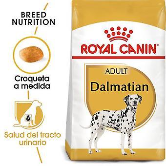 Royal Canin dalmatiske Adulto (hunde, hund mad, tør mad)