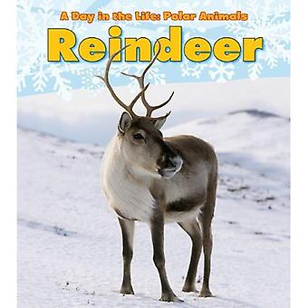 Reindeer (Day in the Life: Polar Animals)