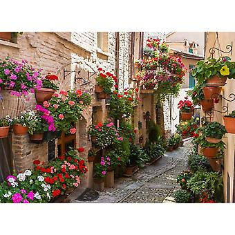 Fondo de pantalla Mural Flower Alley en Spello