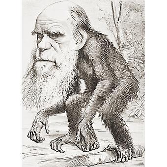 צ'ארלס דרווין 1809-1882 הטבע האנגלי כאן מוצג כקוף בקריקטורה במגזין הצרעה של 22 מרס 1871 הכיתוב קרא הנכבד Orang-Outang-תרומה להיסט הלא טבעי