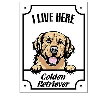 Plåtskylt Golden retriever Kikande hund skylt