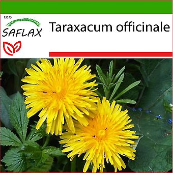סאקפלקס-200 זרעים-עם אדמה-שן הארי-פיסנאור-דנטה די לאונה-דינטה דה לאון-לוונונבאהן
